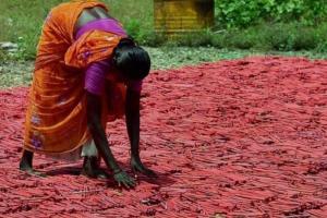 Sivakasi firework manufacturers upset over Delhis Diwali firecracker ban