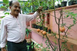 Air potato egg fruit A peek into Mr Blanys terrace garden in Mangaluru