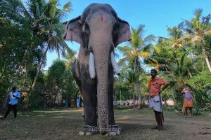Housewarming ceremony in Kerala turns tragic elephant tramples two to death