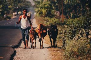 78 of rural Indians saw their work coming to a standstill during lockdown Survey