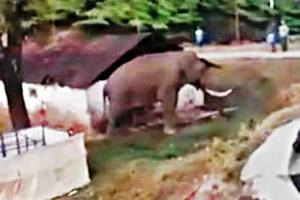 Idukki wants wild elephants relocated Heres why thats unfair to Padayappa and co
