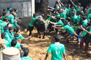 Insure all who attend jallikattu events from 2020 Madras High Court