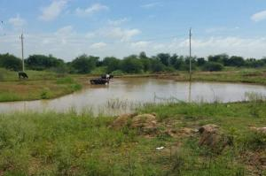 Global NGOs claim of reviving an already revived Bluru lake makes citizens angry