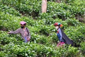 Modern-day bonded labour The inhuman work conditions of TN tea estate workers