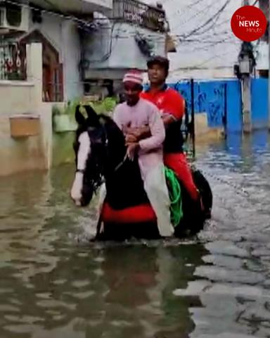 Horses come to the rescue of Hyderabad residents stranded in floods