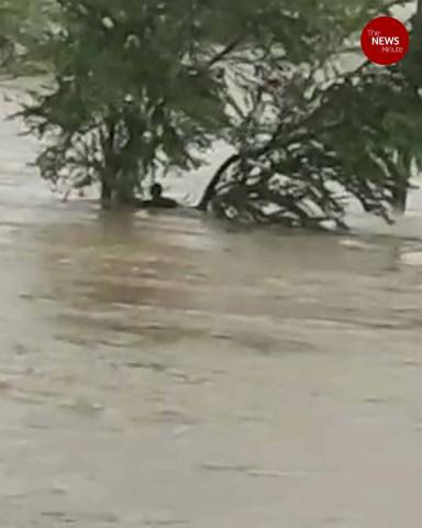 Cyclone Nivar: One man washed away in flood waters in Andhra