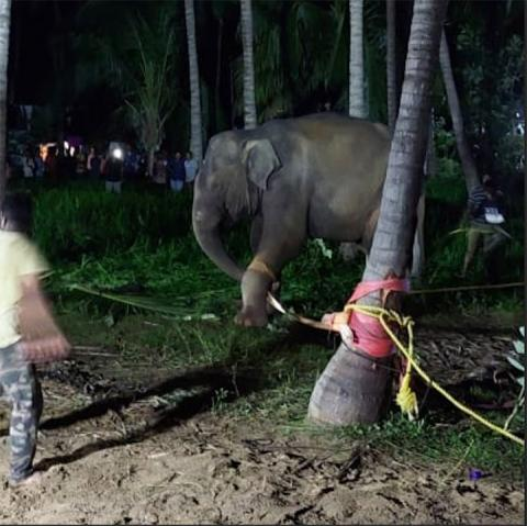 Elephant rescued from well in Tamil Nadu after 14-hour operation