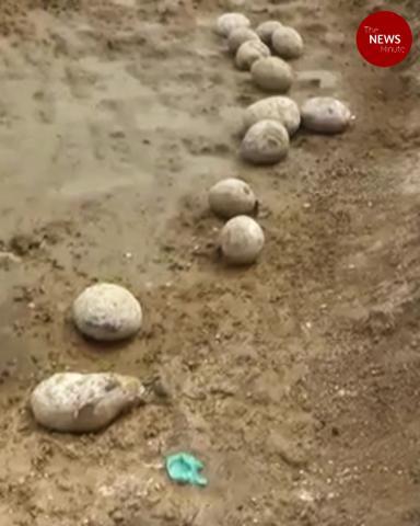Dinosaur eggs in this Tamil Nadu district? Finding sparks debate