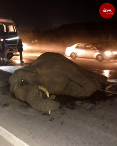 Elephant hit by container truck on Hosur-Krishnagiri highway dies