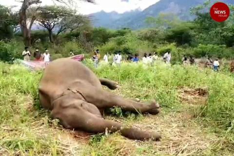 Elephant found shot dead in Coimbatore, bullet recovered from skull