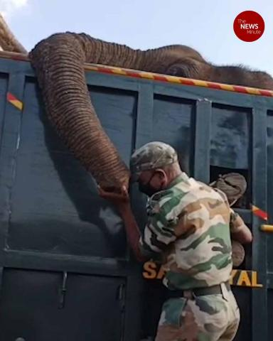 Elephant being taken for treatment dies in TN, Forest officials get emotional