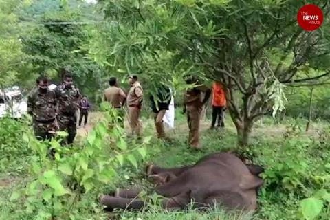 Elephant with injured jaw and stomach tumour found dead in Kerala forest