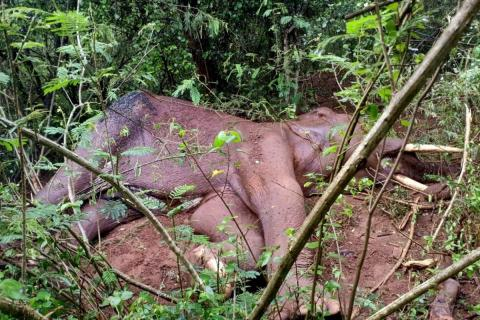 The elephant succumbed after slipping from a hilly terrain in Coimbatore