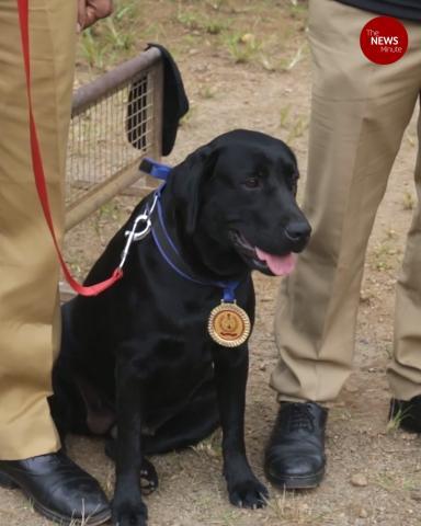 Kerala police dog Dona honoured for completing tests after landslide rescue efforts