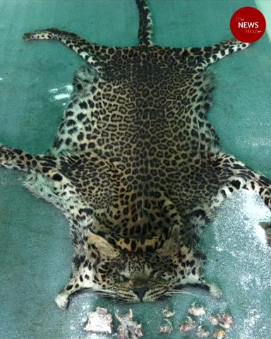 Five Kerala men arrested for hunting and eating leopard