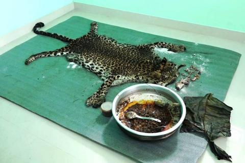 A green mat with leopard skin, bones and leopard meat in a cooking vessel displayed