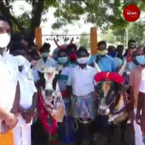 Lakshmi and Manjamalai reunite: Temple bull's viral video leads to happy ending