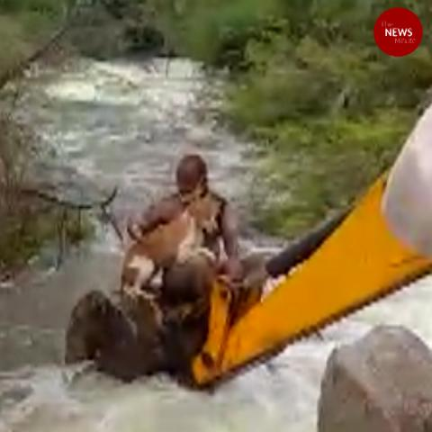 Telangana home guard rescues dog stuck in an overflowing stream