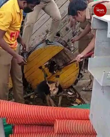Chennai officials rescue a dog stuck in a cable reel drum #TNMGoodNews