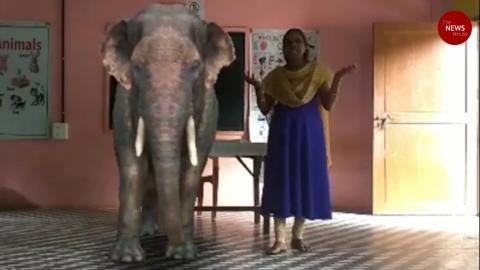 Elephants, cows in class: Kerala school uses augmented reality in online lessons