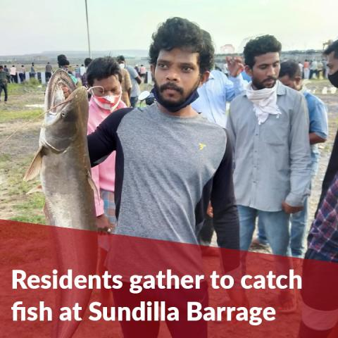 Several residents gather to catch fish at Telangana's Sundilla Barrage