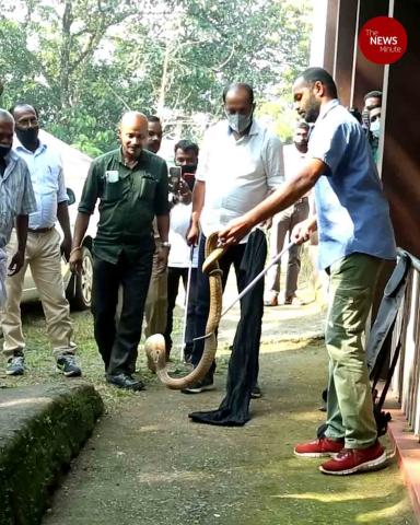 Kerala to have certified trainers to catch and rescue snakes in the state