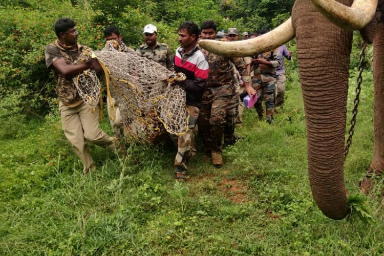 Tiger captured in Bandipur Tiger Reserve