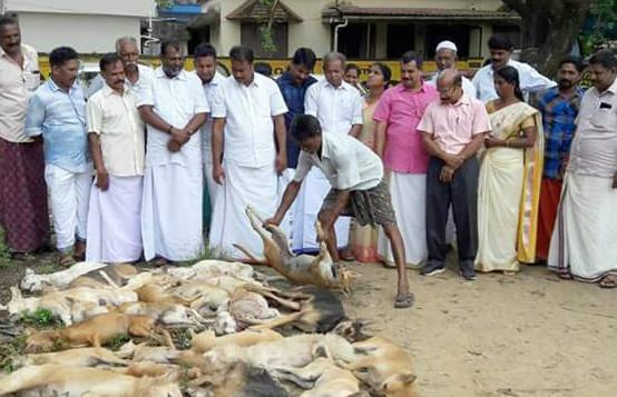 Kerala dog massacres continue 40 killed 15 allegedly slammed to death