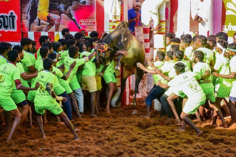 Two dead over 30 injured in Alanganallur Jallikattu in Madurai