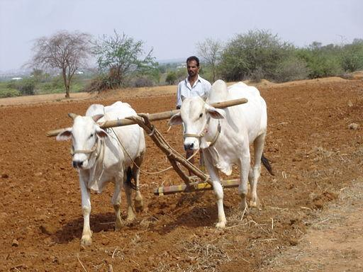Seven-fold increase in Karnataka farmer suicides