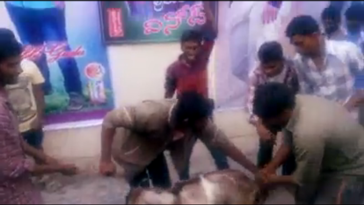 Video Junior NTR fans slaughter lamb during film release in Kadapa