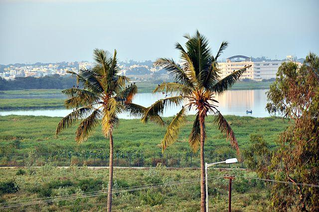 Committee appointed for ecological survey in Bengaluru lakes slammed by green tribunal