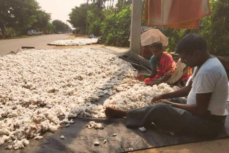 A farmer and his wife sitting on the roadside with their cotton harvest in Telangana