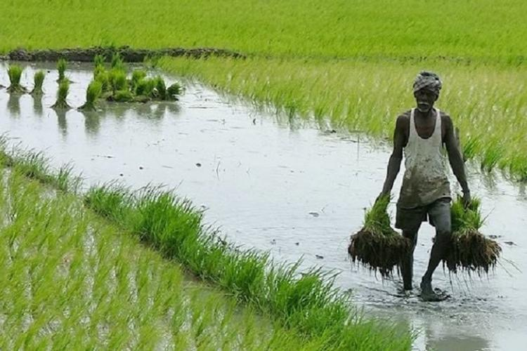 Representative image of a farmer at work in a green field He is walking in a water-filled field carrying a bundle of saplings in each of his hands
