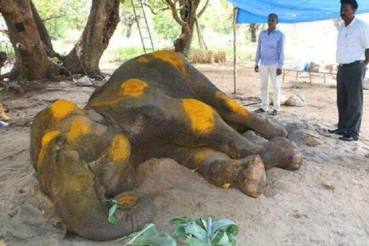 Shocking and painful Devotees slam HCs mercy killing order for TN temple elephant