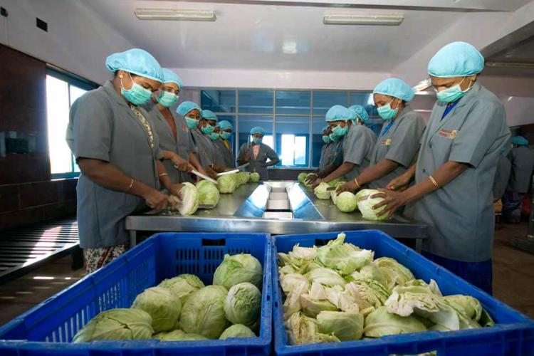 Around six cooks standing around a kitchen board wearing blue hair nets and cutting cabbages to add to the midday meal served by the Akshaya Patra foundation