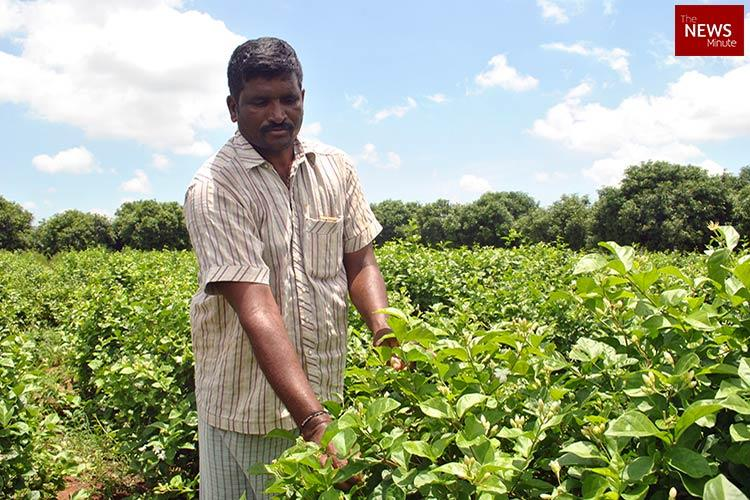 Price of a dream city Andhra farmers are caught in the uncertain promise of Amaravati