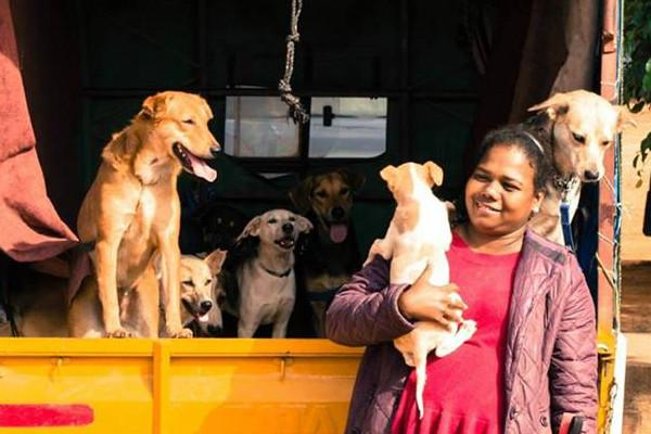 Rescue and rehabilitate This Bengaluru woman is trying to find 43 abandoned dogs a home