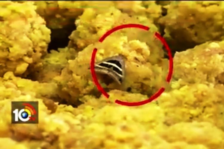50000 laddus destroyed after insects found in Andhras Kanaka Durga temple
