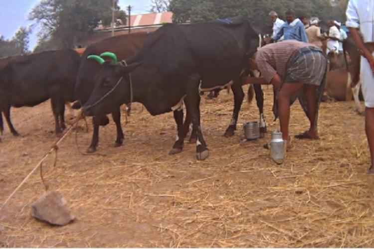 Livestock keepers in Andhra Pradesh can now avail a host of services for their animals at the Rythu Bharosa Kendras RBKs using state issued health cards