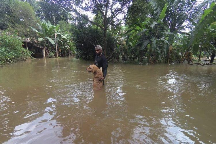 Found animals tied distressed scared Volunteers recount rescue in Kodagu Kerala