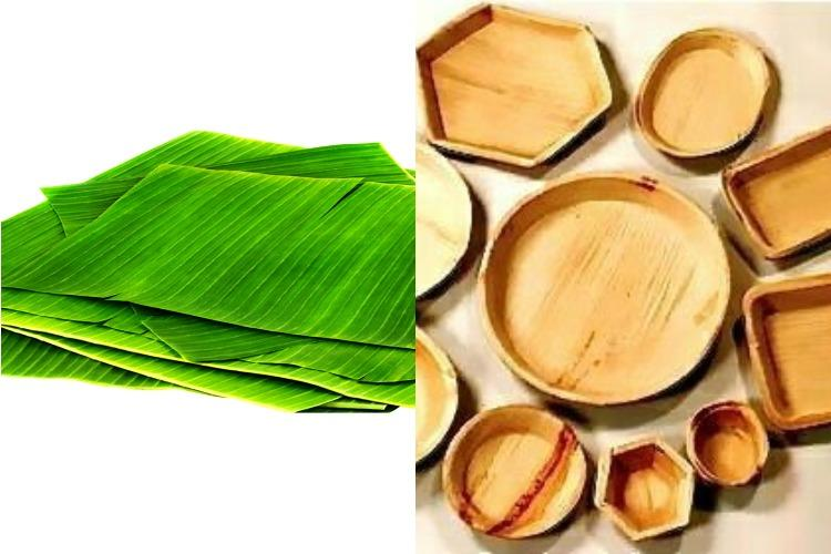 TN plastic ban effect Farmers see new demand for banana areca nut leaves