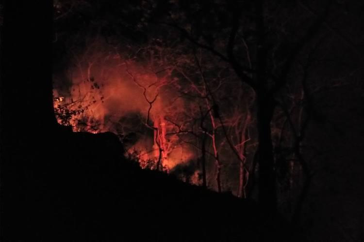 The forest cried for help and we went How a FB post got Kerala to fight a wildfire