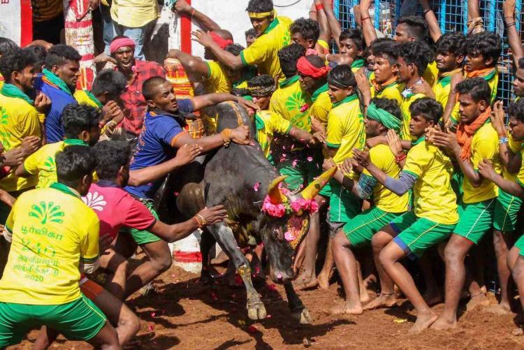 Bull-tamers lining up in Avaniapuram jallikattu in Jan 2020