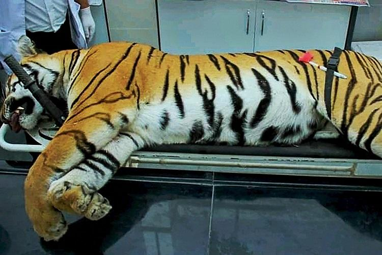 Acted on state order will sue those who mudsling Hyd shooter who killed tigress Avni