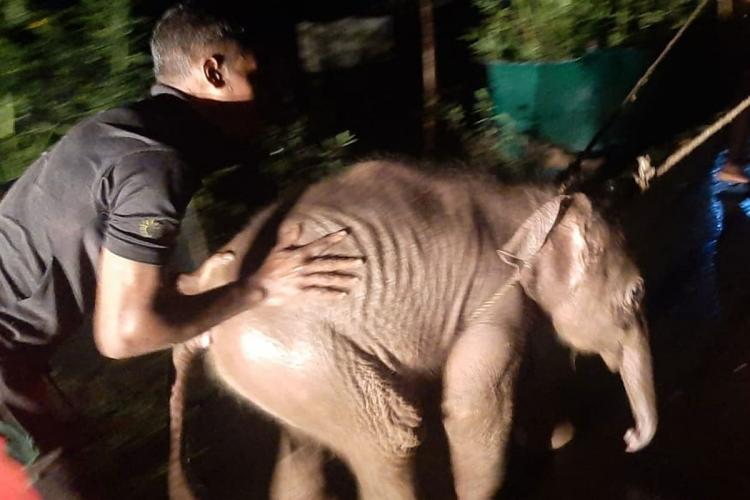 Baby elephant trapped in river during flash flood being rescued