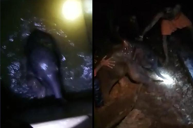 Watch Coimbatore forest officials rescue baby elephant from 10-ft-deep water tank