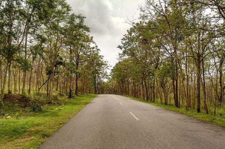 No tourists in Karnatakas Bandipur Nagarhole wildlife sanctuaries starting July 10
