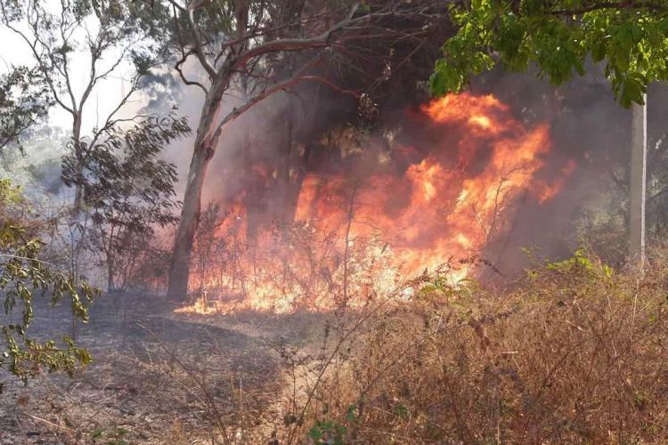 Grass at Bengaluru University catching fire