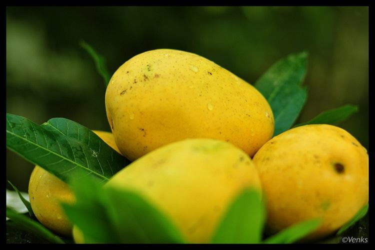 If its Banganapalle mango it has to be from Andhra GI tag awarded to fruit variety